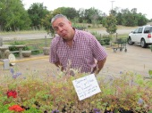 2011 - 1 Blue Bonnet in a nursery.